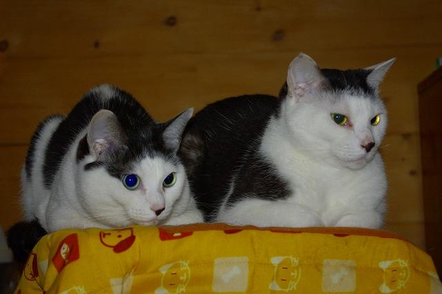 ココ(♀左)とマル(♀右)