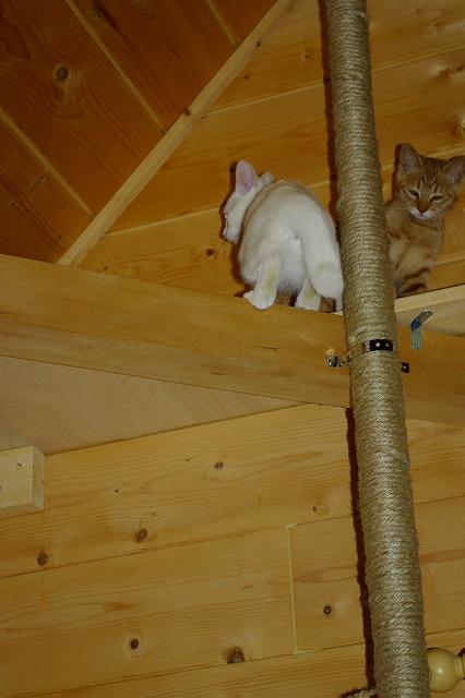 ポールを登ってキャットウォークへ上がったゼリとロビ