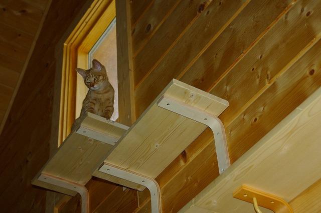 天窓の横から見下ろすロビ